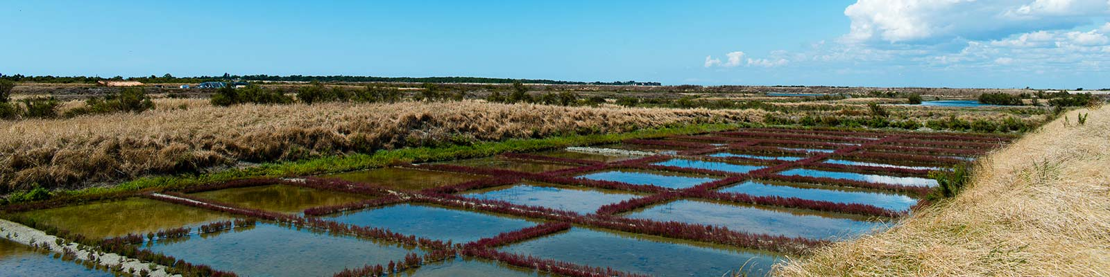 Visit the Ecomuseum of the Salt Marshes