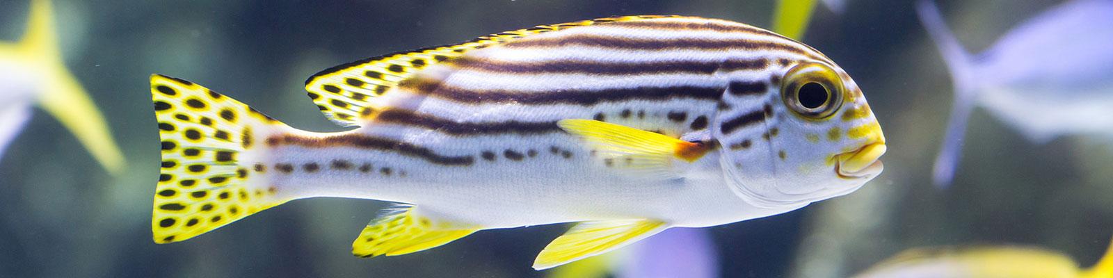 Visiter l'aquarium de La Rochelle