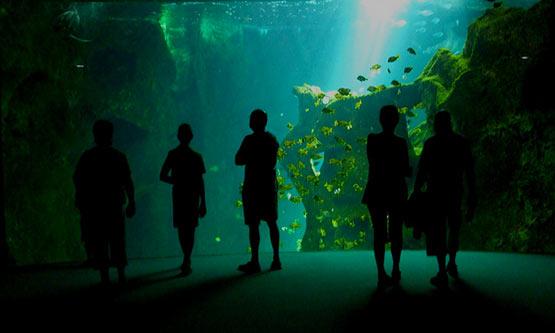 Aquarium de La Rochelle camping Varennes