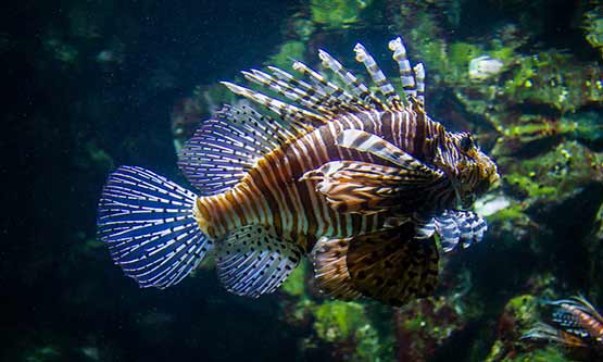 Aquarium Poitou Charentes
