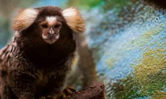 Le Zoo de la Palmyre Ile de Ré