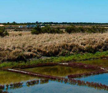 ecomuseum salt marsh near camping île Ré