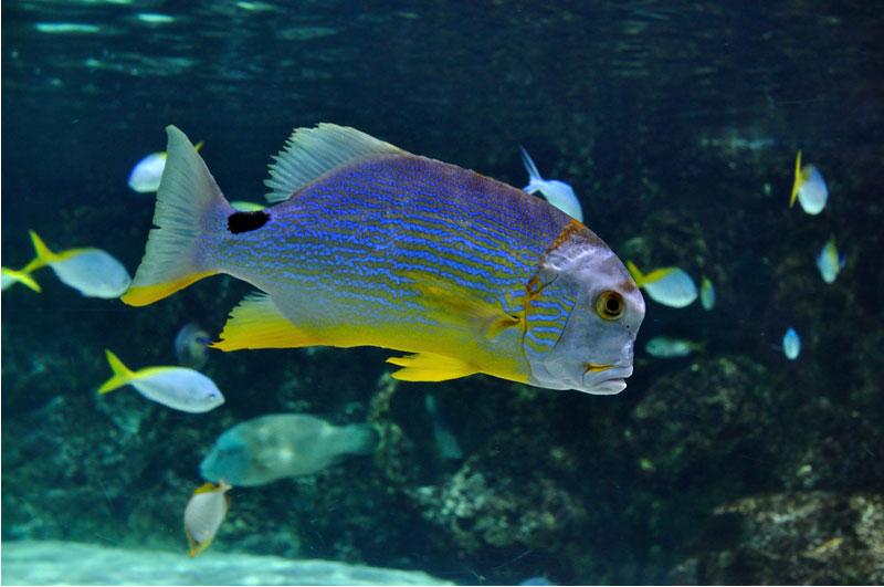 être vivant dans aquarium La Rochelle