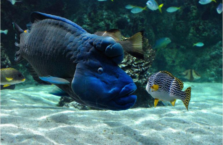 faune aquarium la Rochelle camping Île Ré