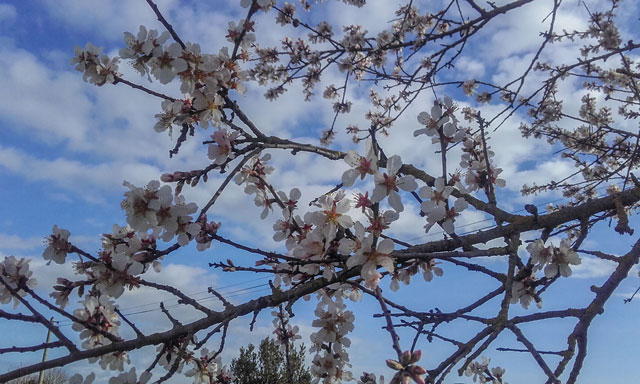 Blumen in der Nähe des Campingplatzes Varennes