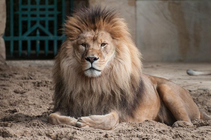 Löwenzoo la palmyra