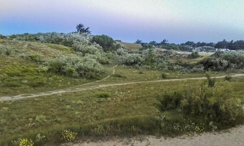 nature près camping île de Ré
