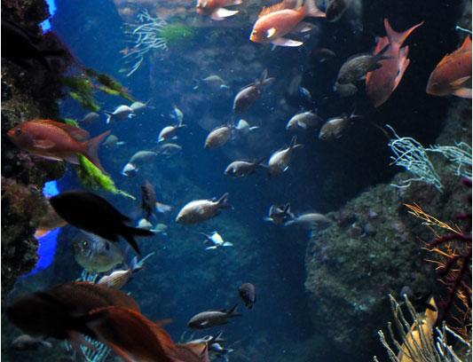 poissons aquarium La Rochelle près camping Varennes
