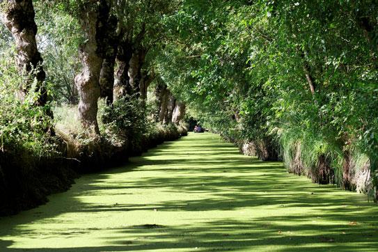 grünes Venedig beim Campingplatz île Ré