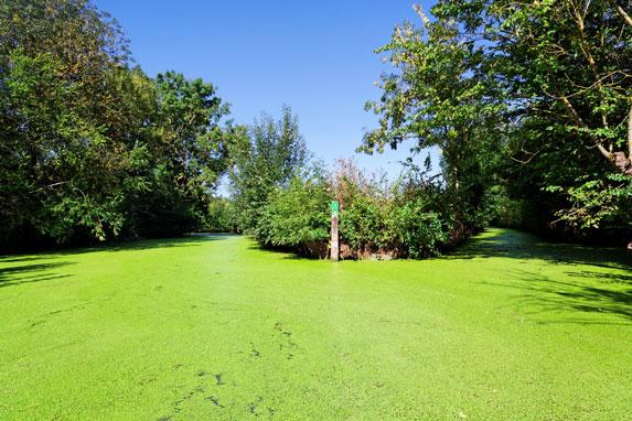 Grün Grün Grün Venedig Grün in der Nähe des Campingplatzes Varennes