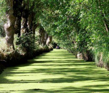 vignette venise verte camping-île Ré