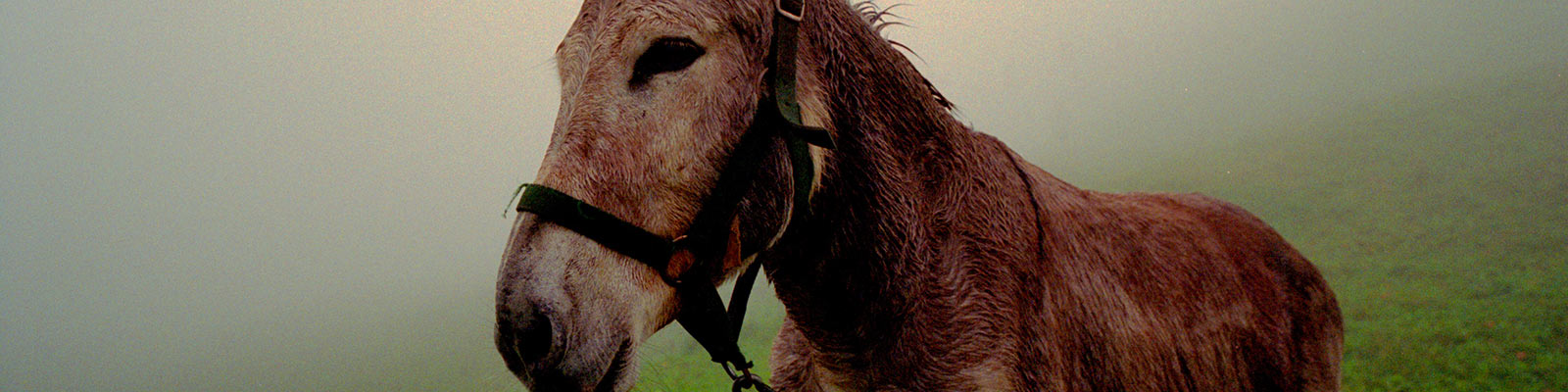 Visit the donkeys in panties, island of Ré